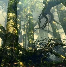 Flotsam forests