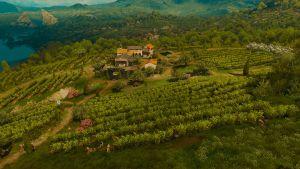 Tw3 baw belgaard vineyard.jpg