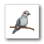 Avatar DiamondDove90x90.png