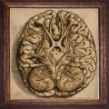 Decorative Painting brain.png