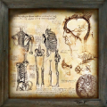 Decorative Painting anatomical.png