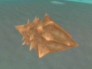 Conch Shell.jpg