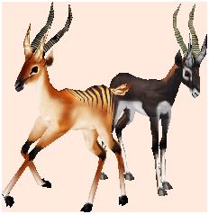Gazelles.png