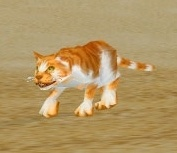 Image of Sand Kitten