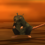 Image of Temple Rat