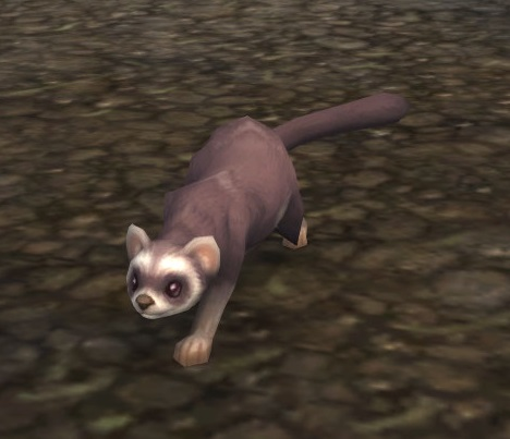 Things To Do In Skye >> Ferret - Wowpedia - Your wiki guide to the World of Warcraft