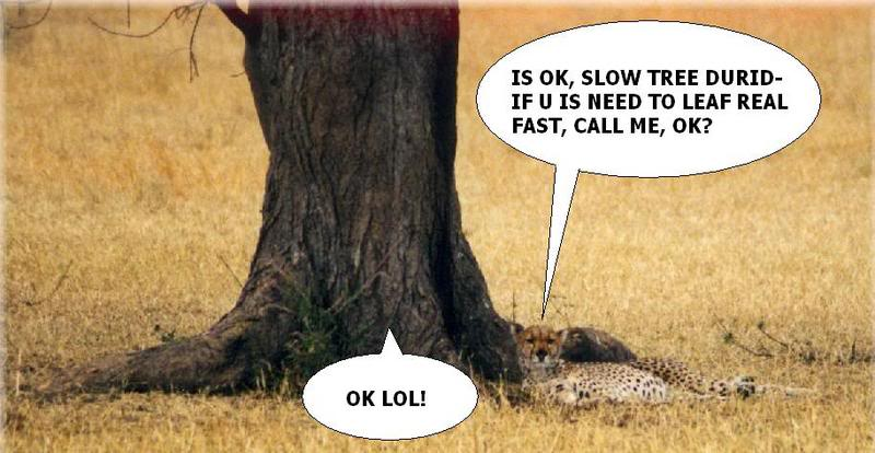 File:Tree-dont-run.jpg