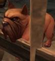 Rabid Mastiff.jpg