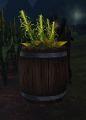 Barrel of Corn.jpg