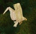 White Tickbird Hatchling.jpg