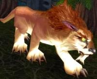 Image of Amani Elder Lynx