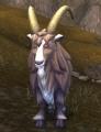 Wild Mountain Goat.jpg