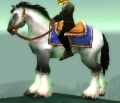 White Stallion.jpg