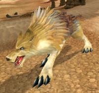 Image of Shaggy Desert Coyote
