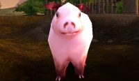 Image of Thunderfoot Pig