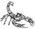 Warcraft I - Scorpion.jpg