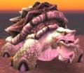 Coralshell Tortoise.jpg