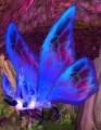 Forest Moth.jpg