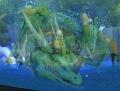Ysera (Emerald Dragonshrine).jpg