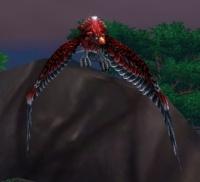 Image of Crimson Lory