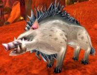 Image of Mottled Boar