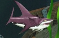 Great Reef Shark.jpg