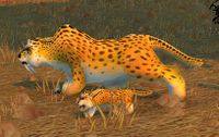 Image of Plainsland Cheetah