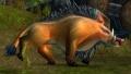 Mountain Boar.jpg