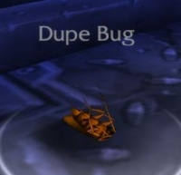 Image of Dupe Bug