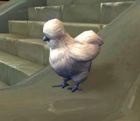 Image of August Chicken