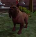 Scarlet Tracking Hound dog.jpg