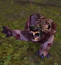 Image of Plagued Bruin