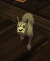 Image of Grumpy