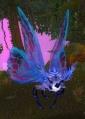 Shimmerwing Moth.jpg