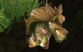 Bulgeback Tortoise.jpg