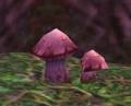 Hyacinth Mushroom.jpg