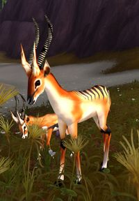 Image of Ringhorn Stag