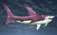 Image of North Sea Mako
