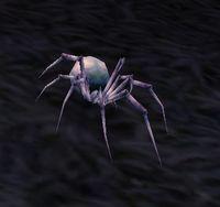 Image of Moonweb Spider