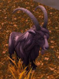 Image of Black Bengal Goat