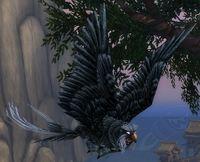 Image of Observer Owl