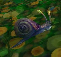 Image of Dreamdew Snail