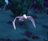 Image of Moonsong Dove