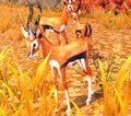 Fairlands Gazelle.jpg
