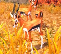 Image of Fairlands Gazelle