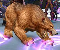 Image of Arena Battle-Bear