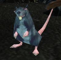 Image of Fjord Rat