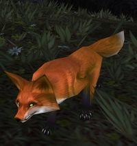 Image of Baradin Fox Kit