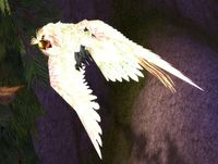 Image of Hyjal Owl