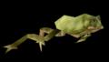 TreeFrog.png